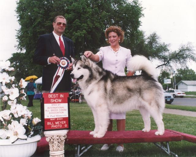 Multiple Best In Show/BBE, Am. Ch. Windchaser's Canadian Hunter
