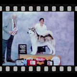 BPIS, BISS, Multiple BVIS,  Am/Grand Champion Ch.  Windchaser's Still The Same